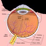 Identificare il Glaucoma nel 2020