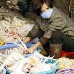Influenza aviaria e rischio pandemia